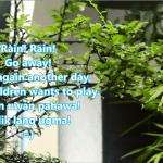 The Rain Song for Rainy Cebu – Sinulog 2014