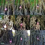 Baler Balete and Not Like Ours Elementals