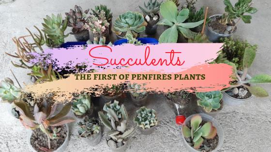 Succulents Cebu